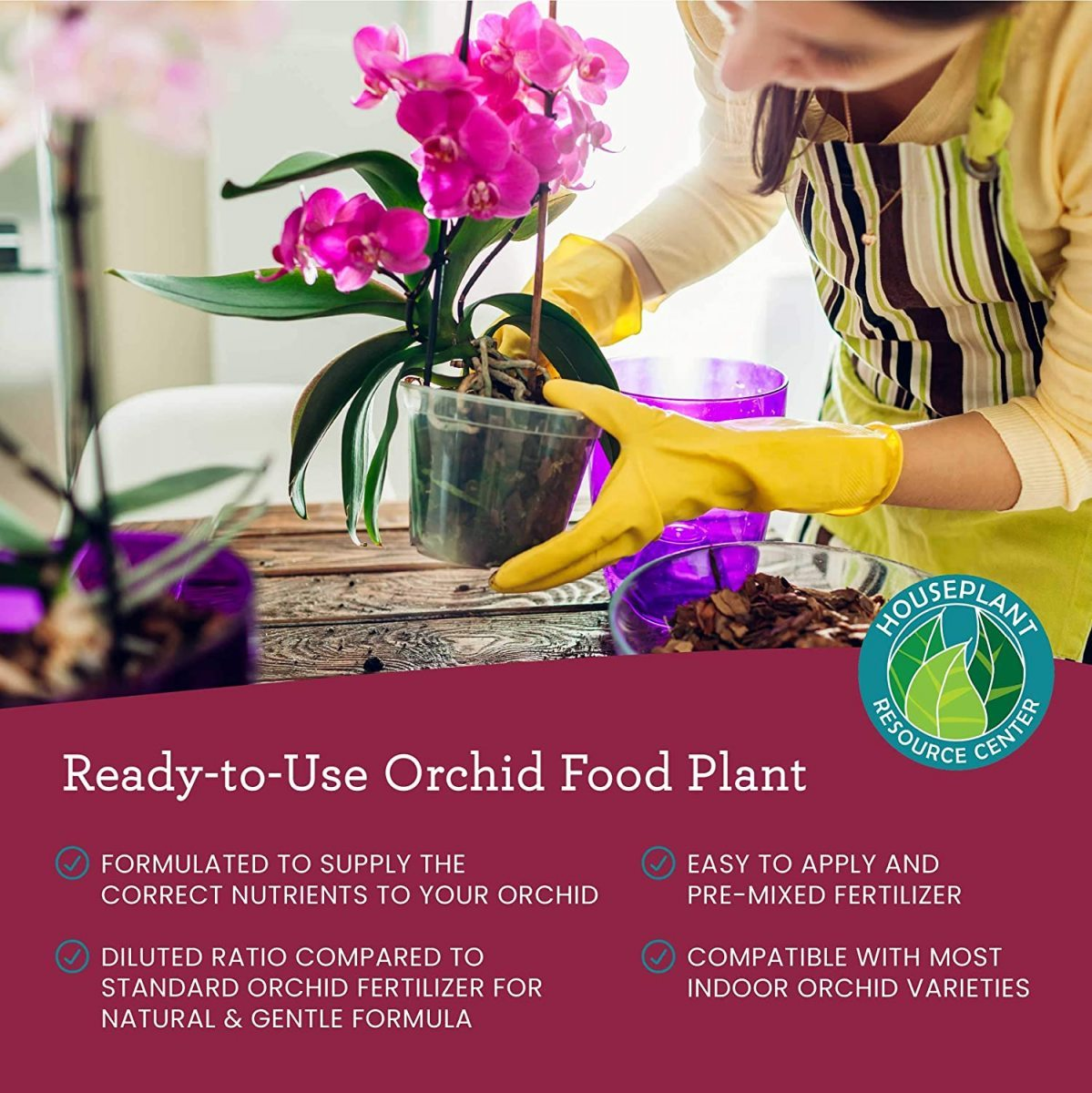 Orchid-Food-Graphic-1