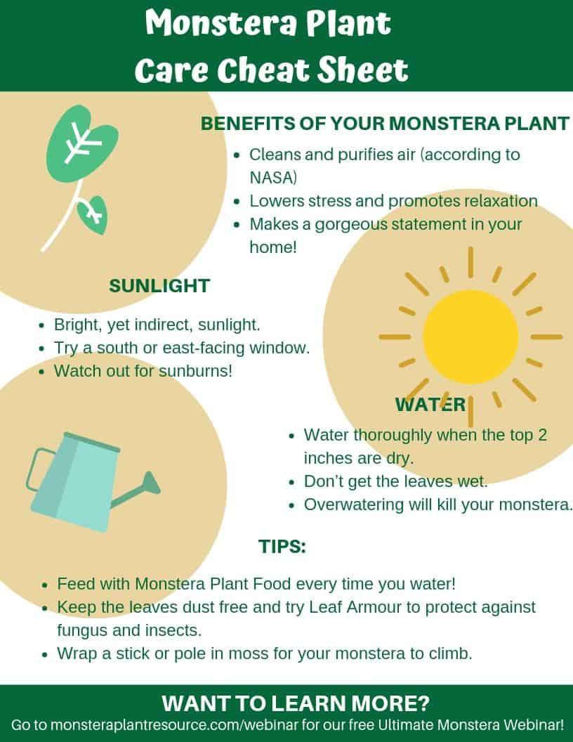 Monstera Plant Care Cheat Sheet 8.5x11