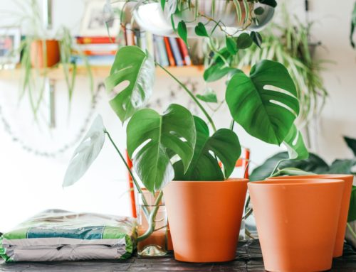 The Ultimate Gift Guide for Monstera Lovers