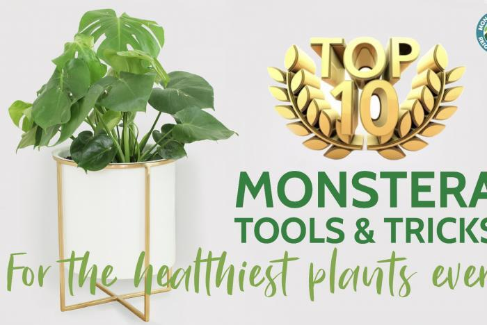 top 10 monstera products